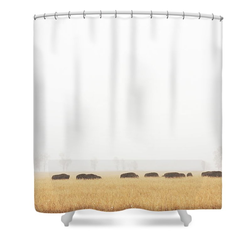 Scenics Shower Curtain featuring the photograph Buffalo Bison Herd Migration Fog by Chuckschugphotography