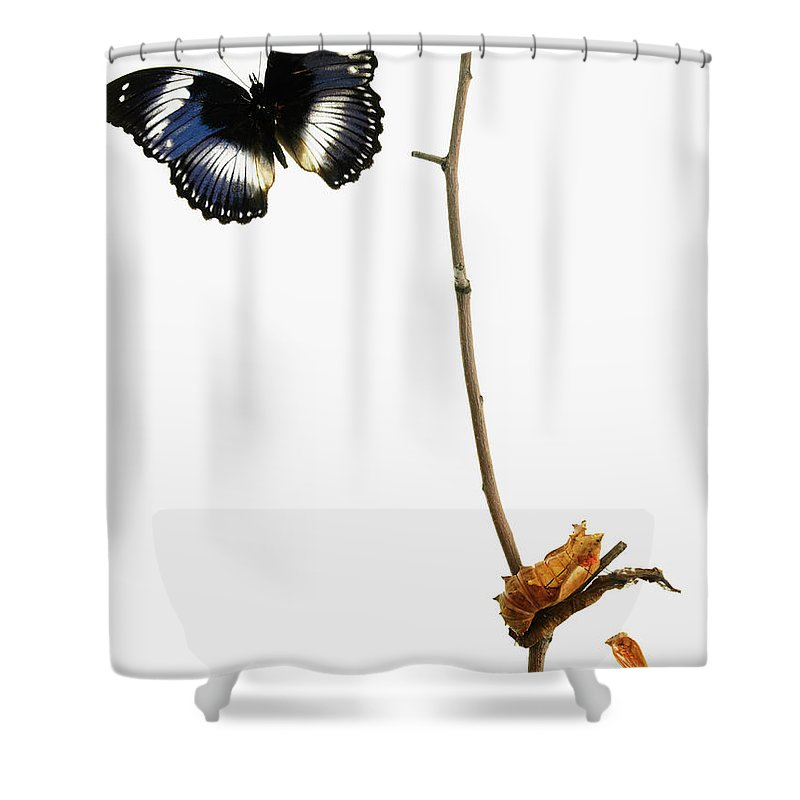 White Background Shower Curtain featuring the photograph Butterfly Transformation by David Arky