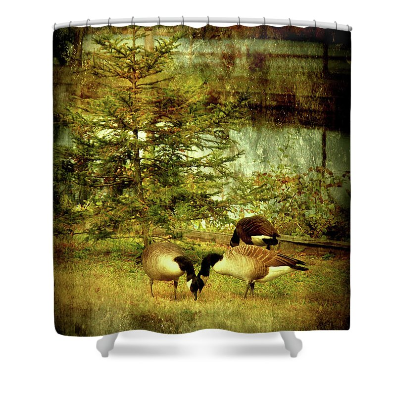 Autumn Shower Curtain featuring the photograph By The Little Tree - Lake Carasaljo by Angie Tirado