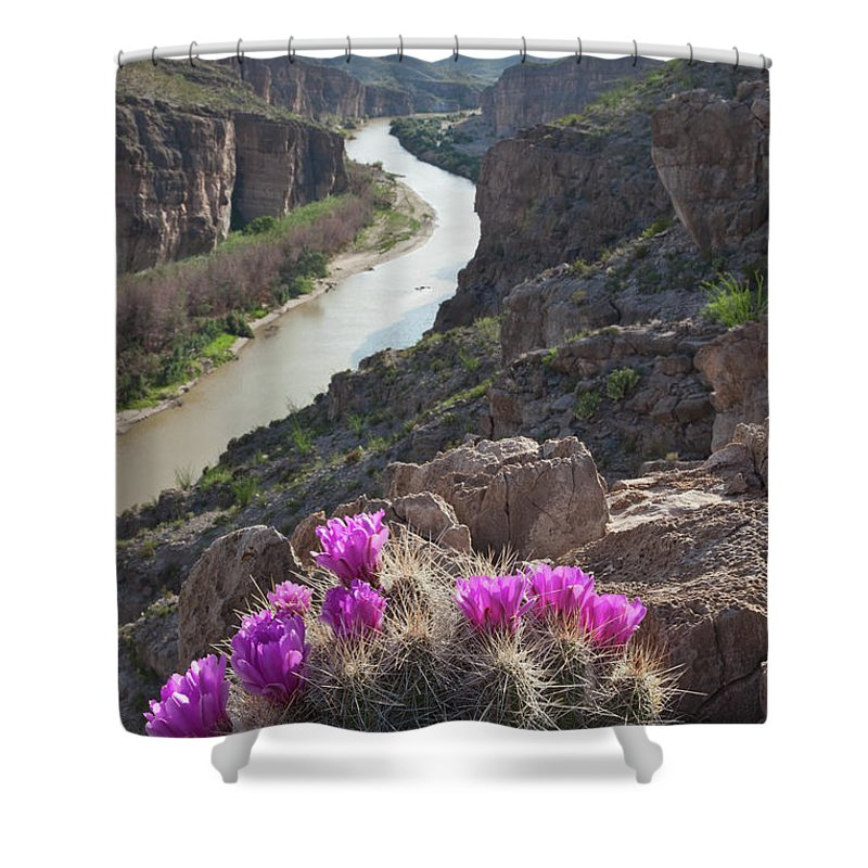 Chihuahua Desert Shower Curtain featuring the photograph Cactus Flowers Overlooking The Rio by Dhughes9