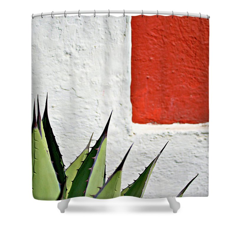 Latin America Shower Curtain featuring the photograph Cactus by Mario A. De Leo Winkler (accrama)