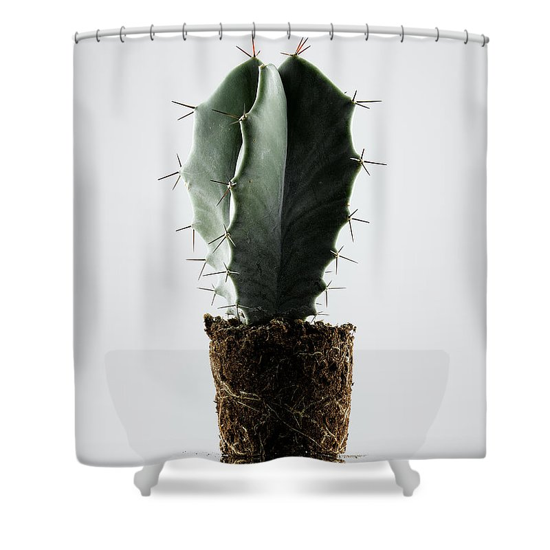 White Background Shower Curtain featuring the photograph Cactus On White Background by Chris Stein