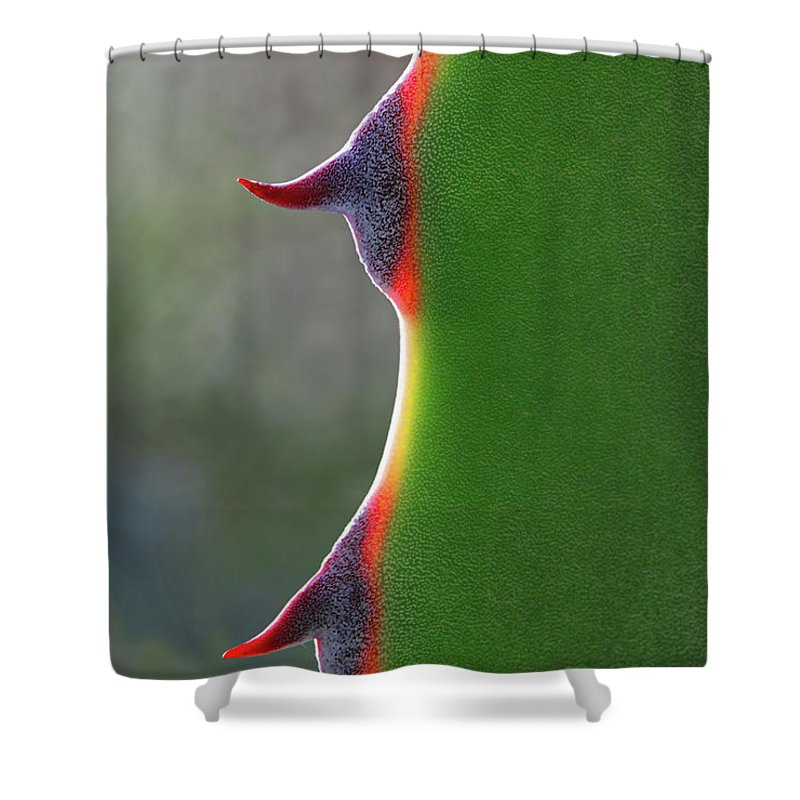 Needle Shower Curtain featuring the photograph Cactus by Patricia Fenn Gallery