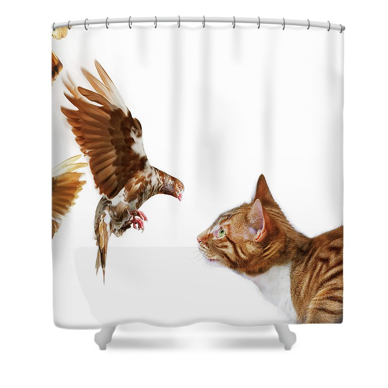 England Shower Curtain featuring the photograph Cat And Bird by Gandee Vasan