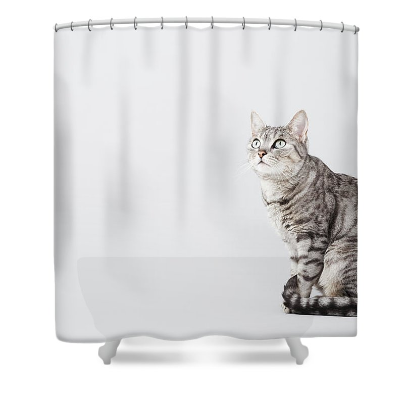 Pets Shower Curtain featuring the photograph Cat Looking Up by Lisa Stirling