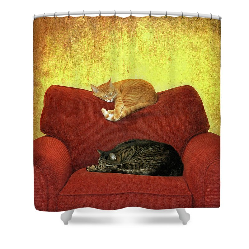 Pets Shower Curtain featuring the photograph Cats Sleeping On Sofa by Nancy J. Koch, Pittsburgh, Pa