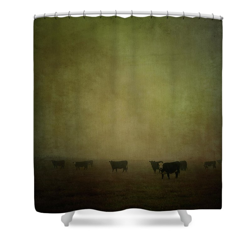 Pets Shower Curtain featuring the photograph Cattle In The Mist by Jill Ferry