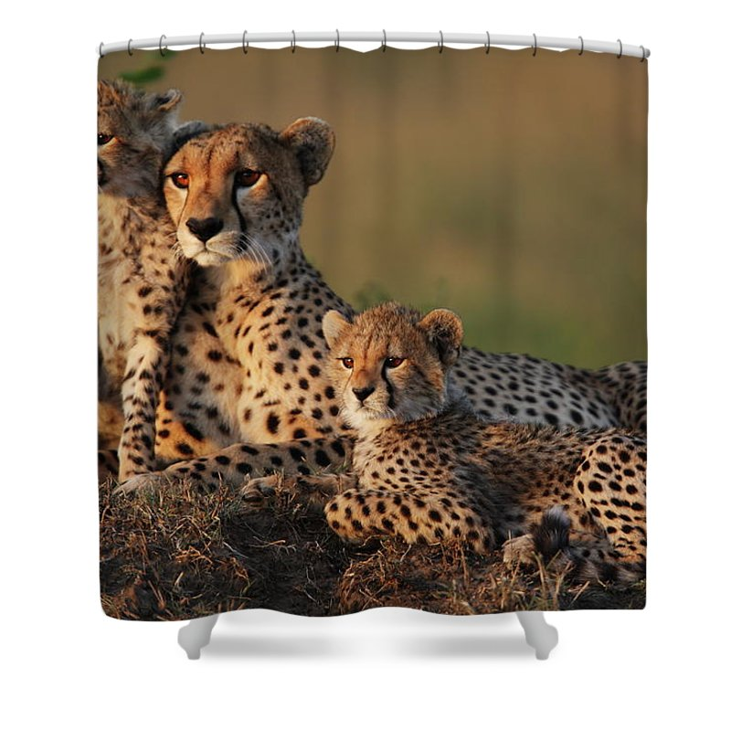 Kenya Shower Curtain featuring the photograph Cheetah Family by Gp232