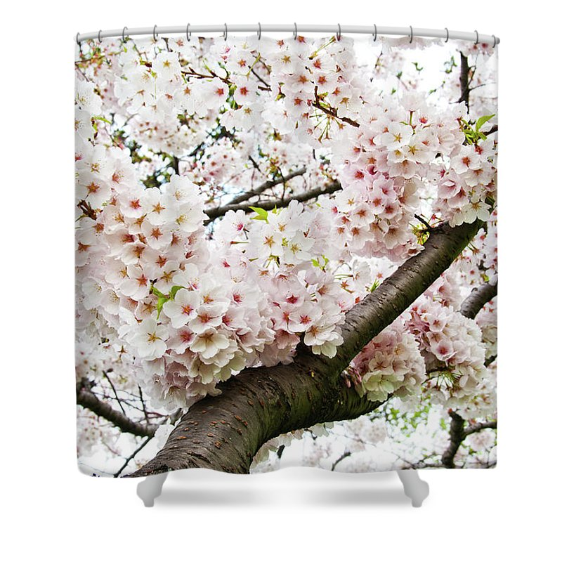 Outdoors Shower Curtain featuring the photograph Cherry Blossom by Sky Noir Photography By Bill Dickinson