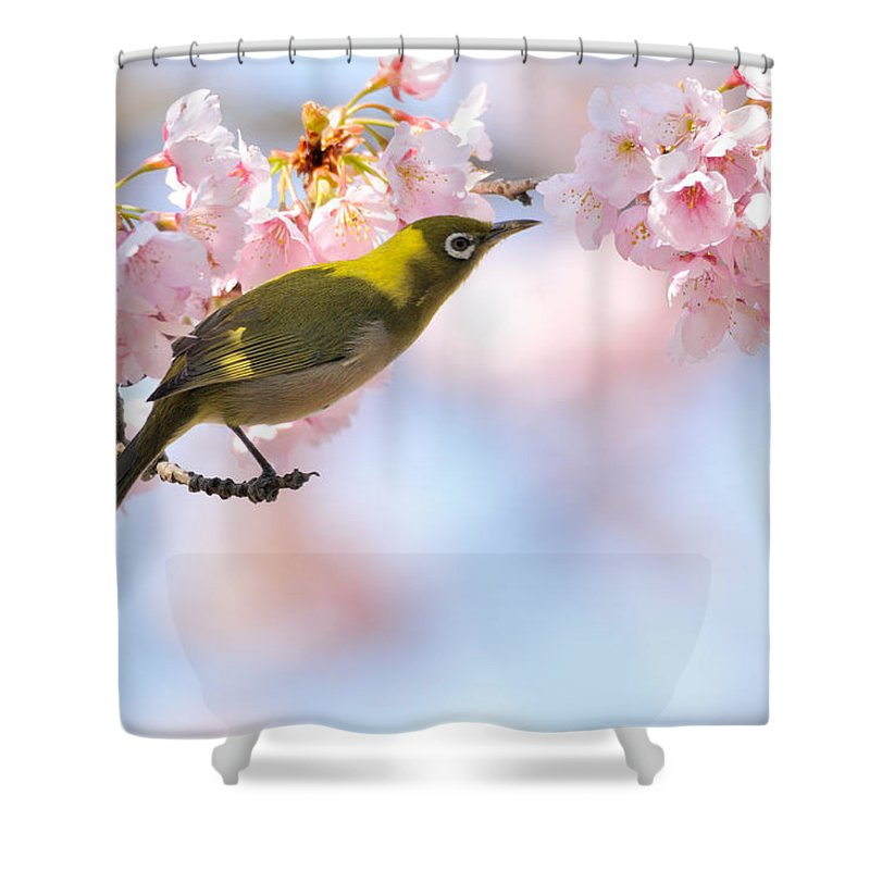 Animal Themes Shower Curtain featuring the photograph Cherry Blossoms by Myu-myu