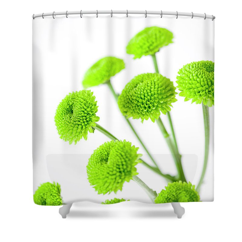 White Background Shower Curtain featuring the photograph Chrysanthemum Flowers by Nicholas Rigg
