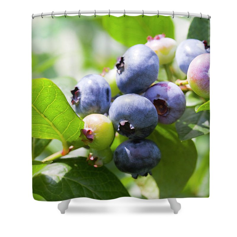 Yamanashi Prefecture Shower Curtain featuring the photograph Close-up Of Blueberry Plant And Berries by Daisuke Morita
