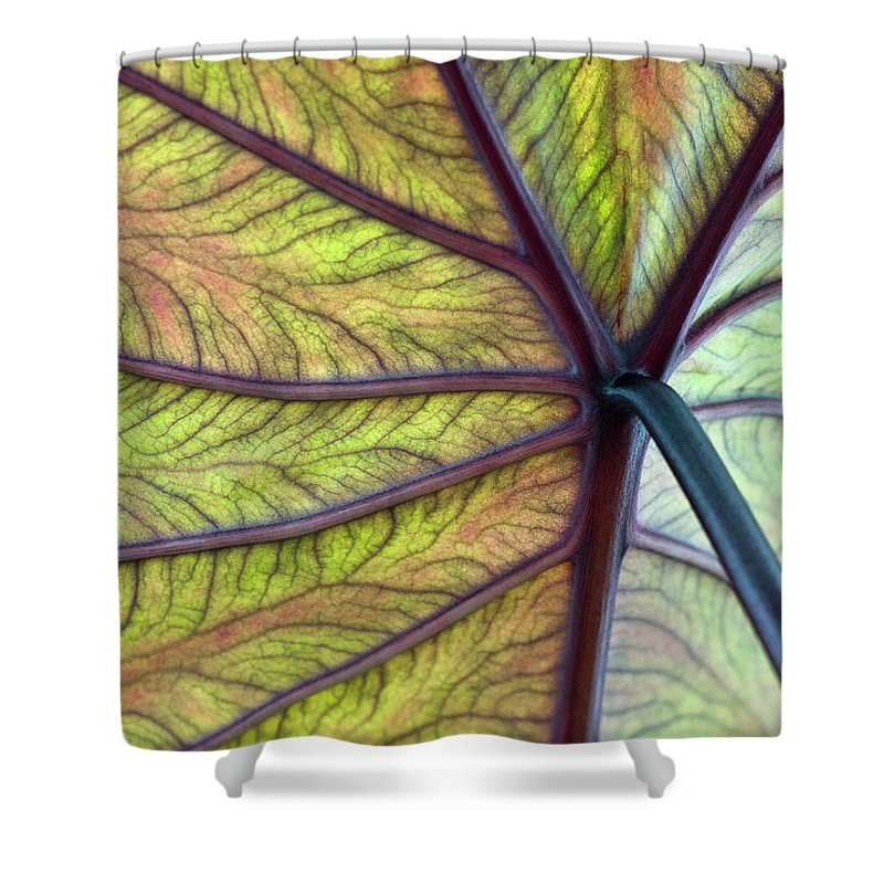 Voodoo Doll Shower Curtain featuring the photograph Close Up Of Colocasia Esculenta Leaf by Deb Casso