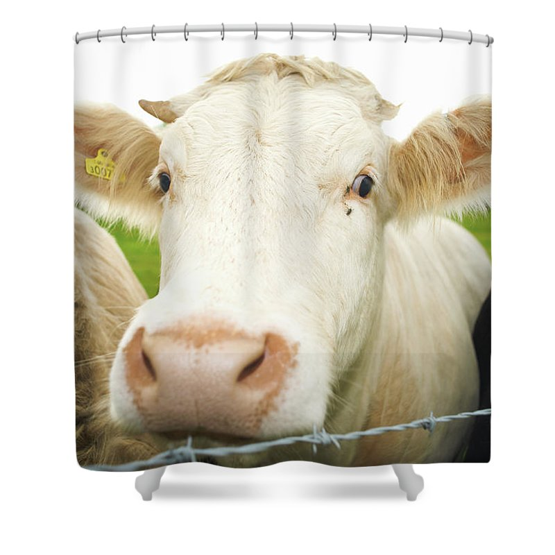 Free Range Shower Curtain featuring the photograph Close Up Of Cows Face by Peter Muller