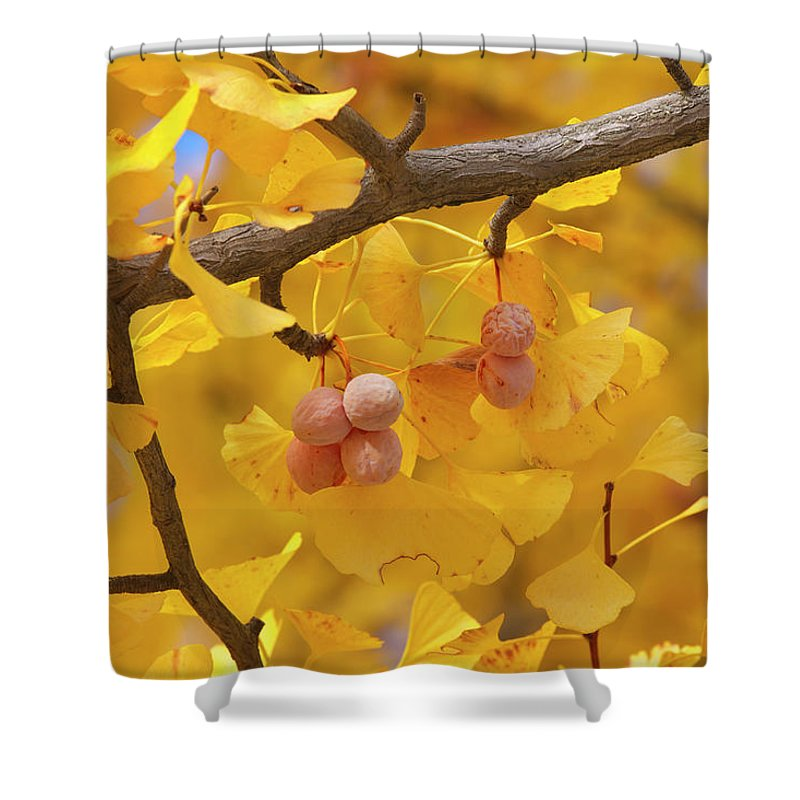 Ginkgo Tree Shower Curtain featuring the photograph Close-up Of Gingko Tree In Autumn by Wada Tetsuo/a.collectionrf