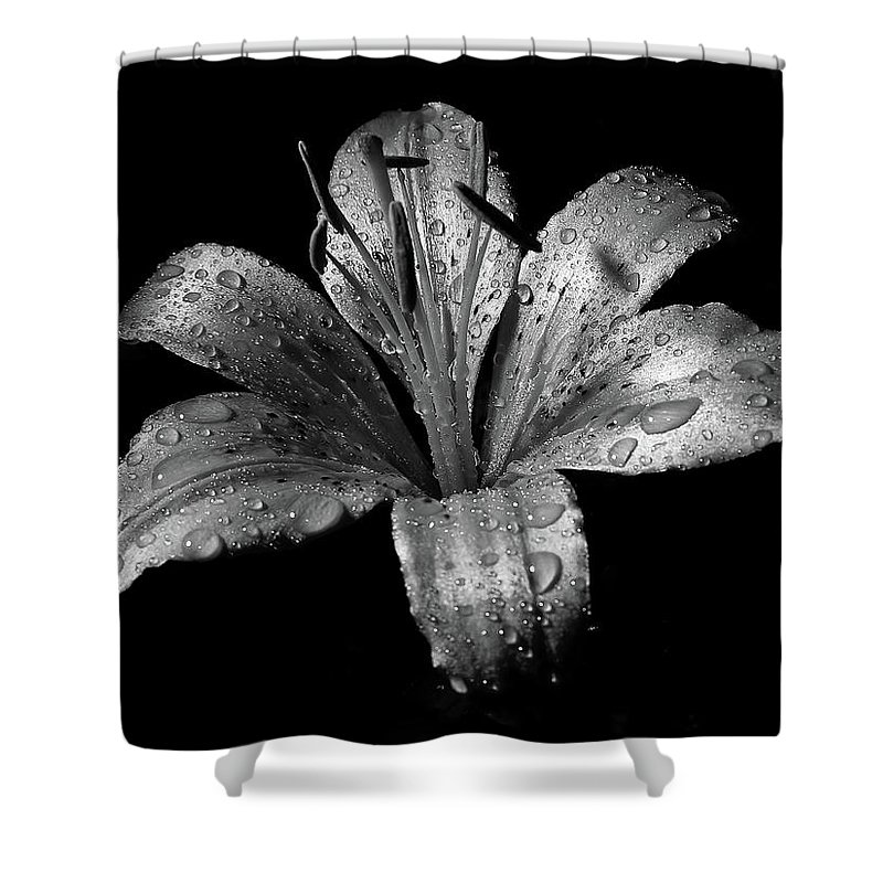 Black Background Shower Curtain featuring the photograph Collection by Photograph By Ryan Brady-toomey