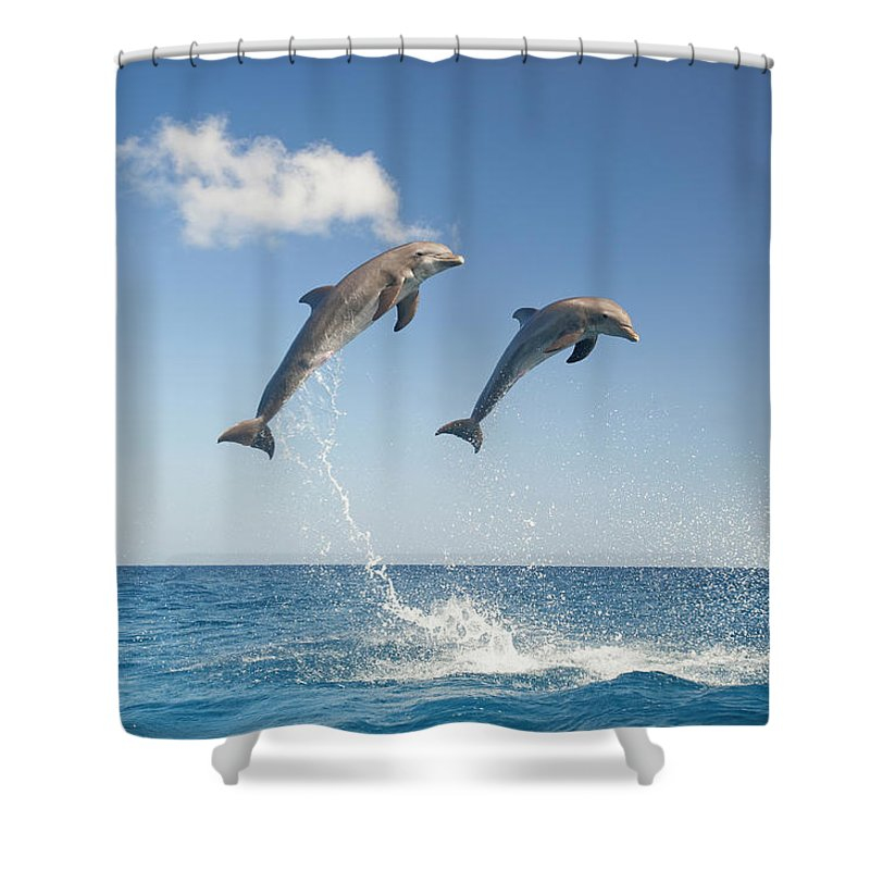 Aerodynamic Shower Curtain featuring the photograph Common Bottlenose Dolphins Tursiops by Mike Hill