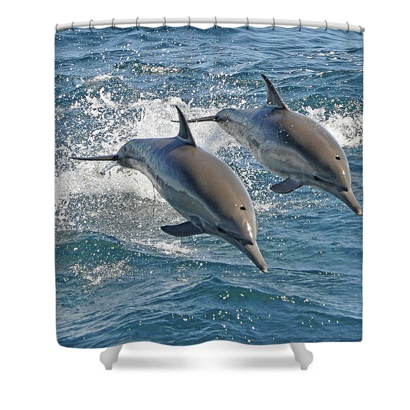 Diving Into Water Shower Curtain featuring the photograph Common Dolphins Leaping by Tim Melling