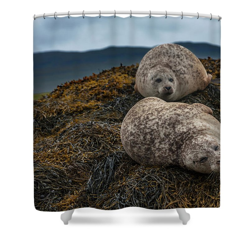 Seaweed Shower Curtain featuring the photograph Common Seals, Loch Dunvegan, Isle Of by Diane Macdonald