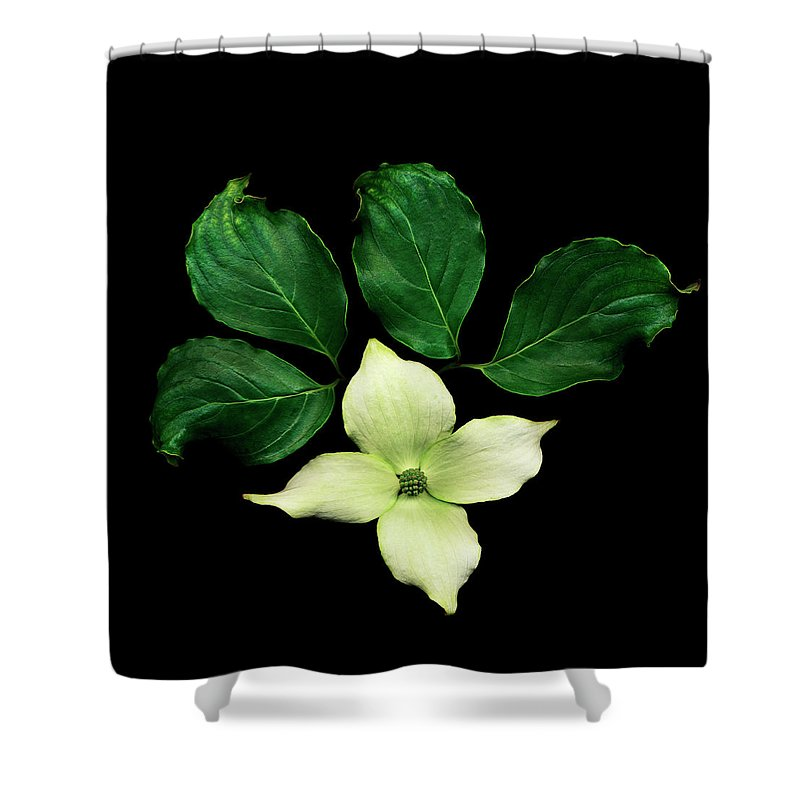 Dogwood Shower Curtain featuring the photograph Cornus Plant Against Black Background by Mike Hill