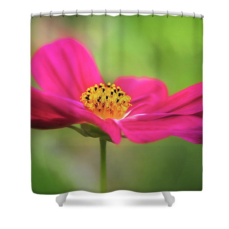 Flower Shower Curtain featuring the photograph Cosmo by S A Littau