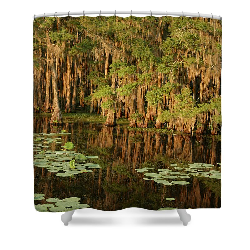Outdoors Shower Curtain featuring the photograph Cypress In The Lake by Jlfcapture