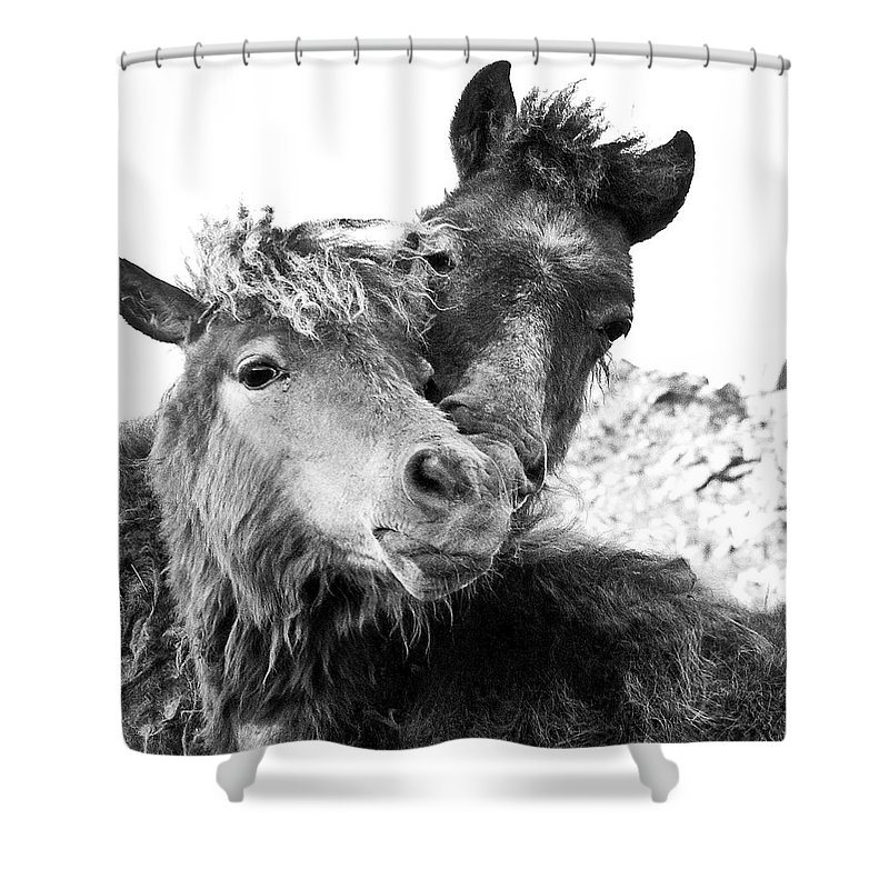 Working Animal Shower Curtain featuring the photograph Dartmoor Ponies by Adam Hirons Photography