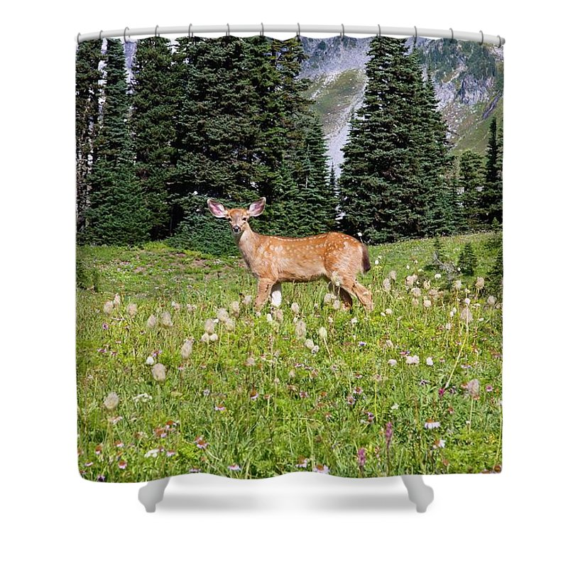 Alertness Shower Curtain featuring the photograph Deer Cervidae In Paradise Park In Mt by Design Pics / Craig Tuttle
