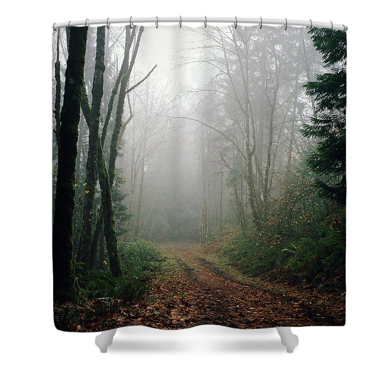Tranquility Shower Curtain featuring the photograph Dirt Road Leading Through Foggy Forest by Danielle D. Hughson