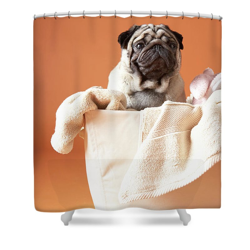 Pets Shower Curtain featuring the photograph Dog In Basket by Chris Amaral