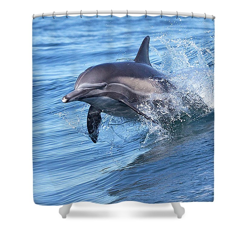 Wake Shower Curtain featuring the photograph Dolphin Riding Wake by Greg Boreham (treklightly)