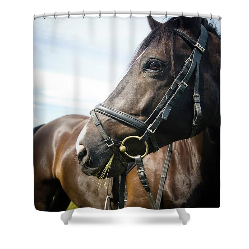 Horse Shower Curtain featuring the photograph Dont Look Back by Pixalot