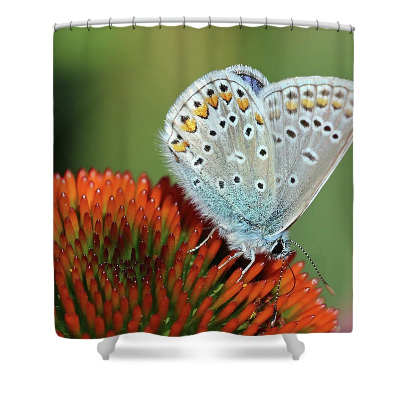 Common Blue Butterfly Shower Curtain featuring the photograph Echinacea And Common Blue Butterfly by Getty Images Verkauf