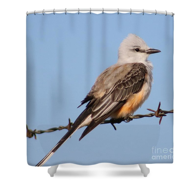 Scissor Tail Shower Curtain featuring the photograph Edward Scissor Tail by Michael MacGregor