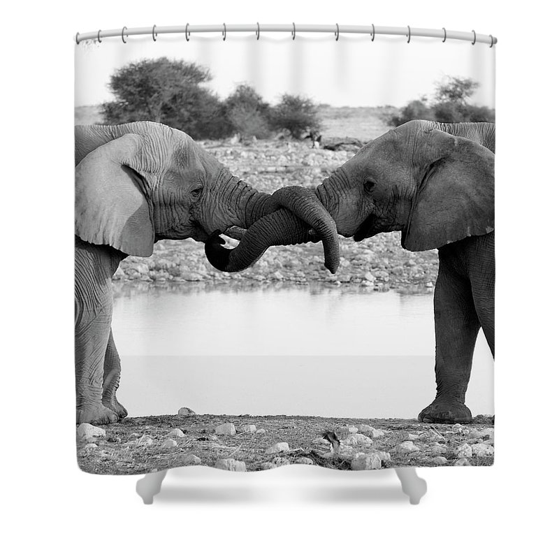 Animal Trunk Shower Curtain featuring the photograph Elephants Curling Trunk by Harrykolenbrander