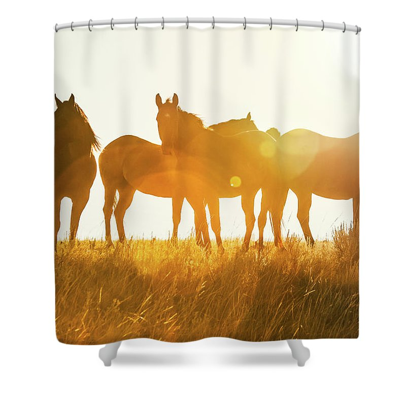 Montana Shower Curtains