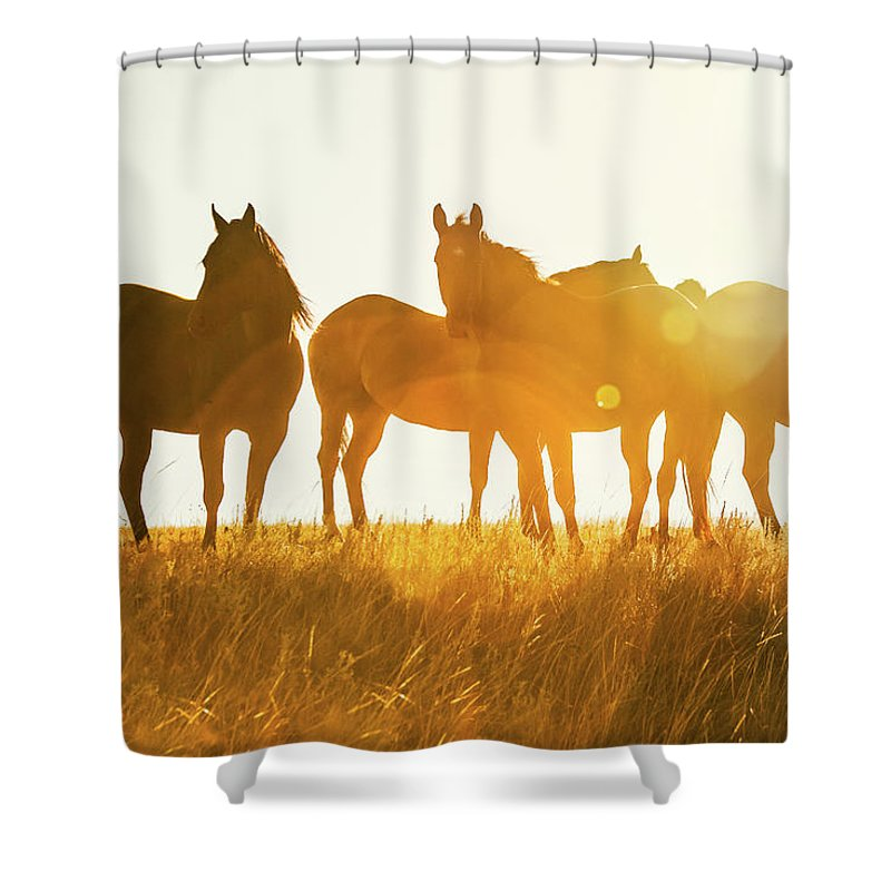 Rural Shower Curtains