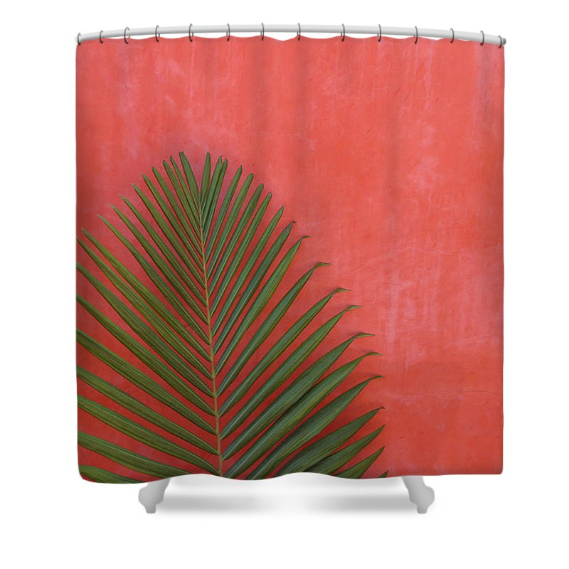 Recreational Pursuit Shower Curtain featuring the photograph Exotic Background by Lucgillet