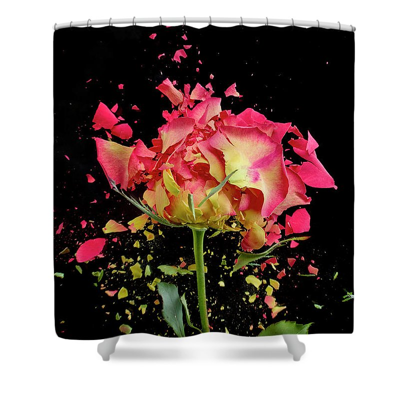 Black Background Shower Curtain featuring the photograph Exploding Rose by Don Farrall