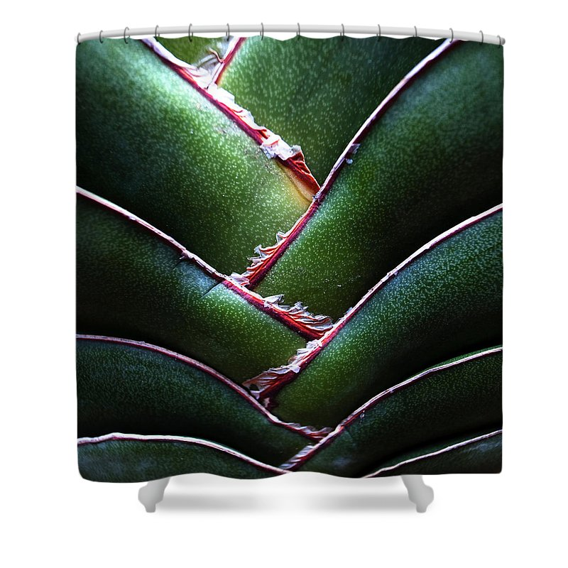 Natural Pattern Shower Curtain featuring the photograph Fan Leave Succulent Plant by Tontygammy + Images