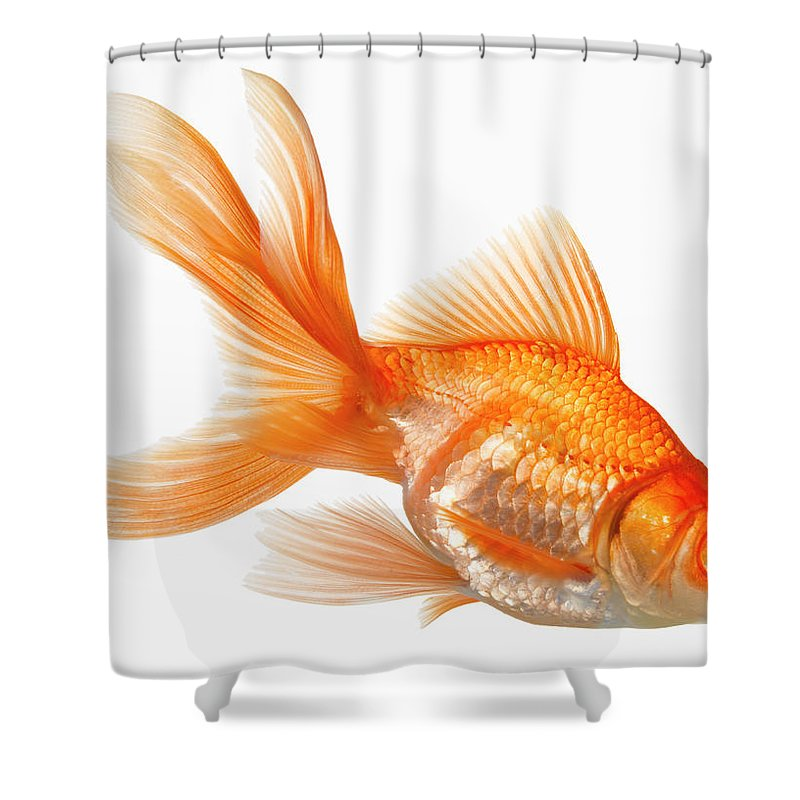 Orange Color Shower Curtain featuring the photograph Fancy Goldfish by Don Farrall