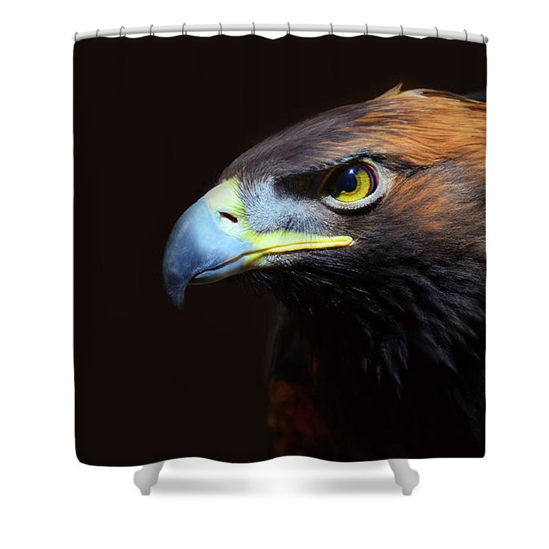Animal Themes Shower Curtain featuring the photograph Female Golden Eagle by A L Christensen