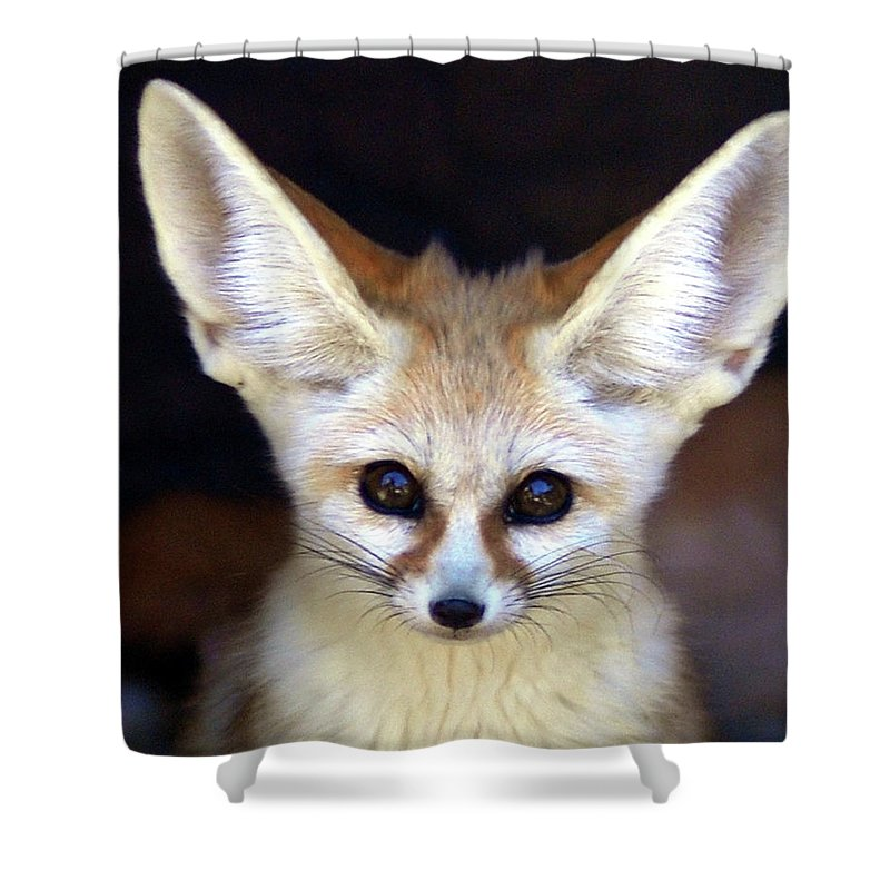 Alertness Shower Curtain featuring the photograph Fennec Fox by Floridapfe From S.korea Kim In Cherl