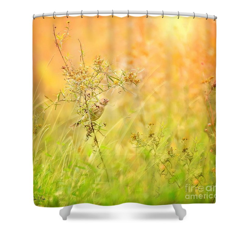 Aves Shower Curtain featuring the photograph Field Sparrow by Heather Hubbard