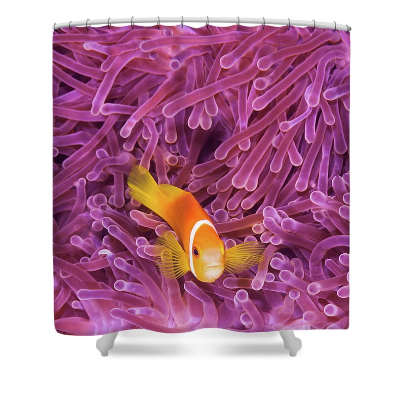 Underwater Shower Curtain featuring the photograph Fish by Extreme-photographer