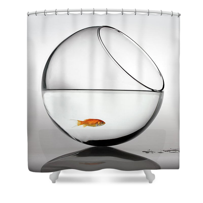 White Background Shower Curtain featuring the photograph Fish In Fish Bowl Stressed In Danger by Paul Strowger