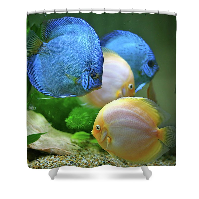 Underwater Shower Curtain featuring the photograph Fish In Water by Vietnam