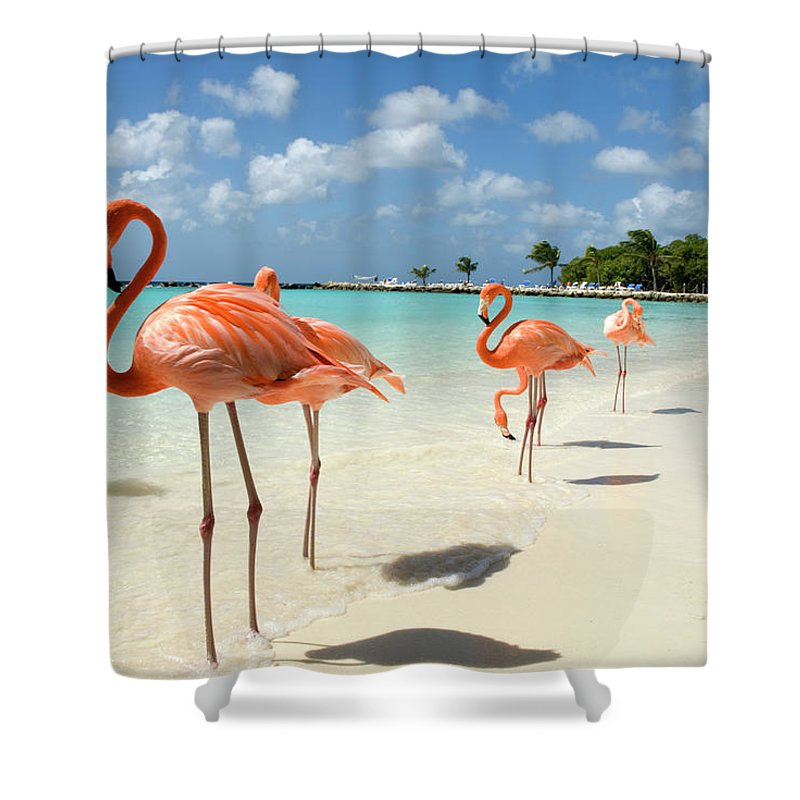 Shadow Shower Curtain featuring the photograph Flamingos On The Beach by Vanwyckexpress