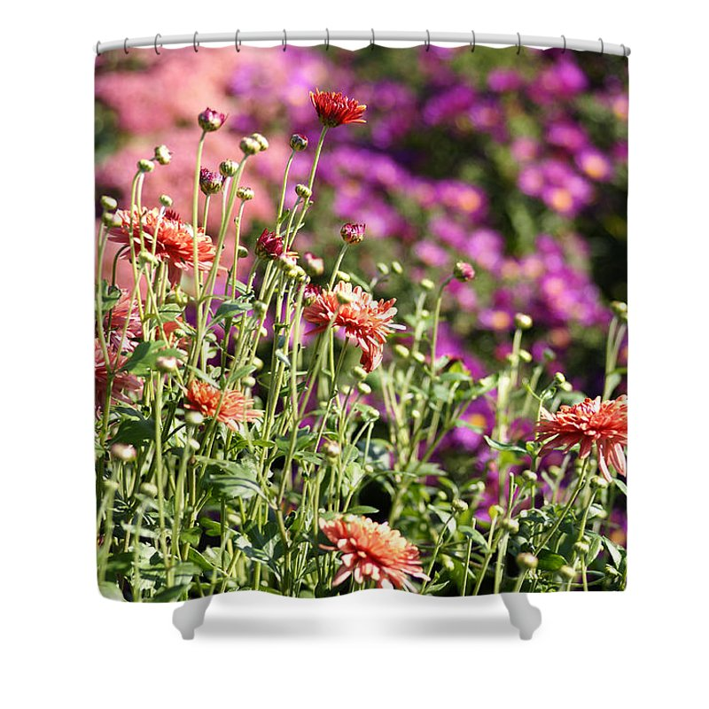 Flowerbed Shower Curtain featuring the photograph Flowerbed With Michaelmas Daisies by Schnuddel