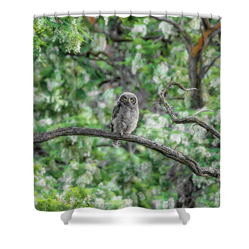 Fluffy Great Horned Owlet Shower Curtain featuring the photograph Fluffy Great Horned Owlet by Wes and Dotty Weber